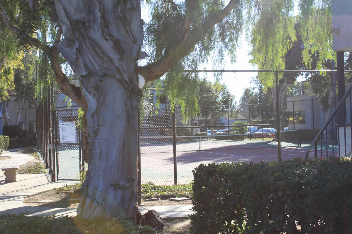 tennis court for the residents of arbor ridge apartments, surrounded by paths and tall trees